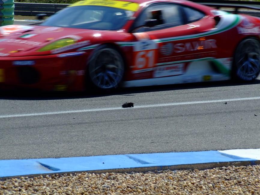Le Mans Series Estoril 2011 (12)